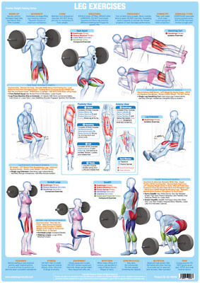Leg Muscles Weight Training and Body Building Poster Exercise Training Chart