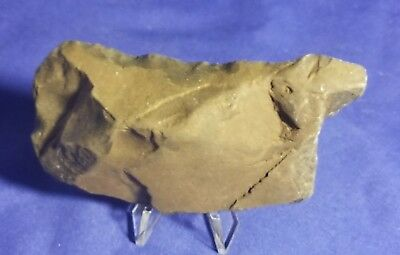 Grooved Paleo Indian Stone Tool Waller Knife Arrowhead Artifact Weapon Axe Blade