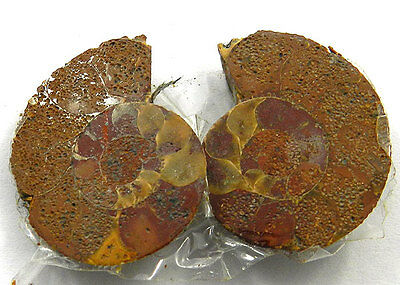 5.48 GM NATURAL AMMONITE FOSSIL 25x20mm Fantastic Loose Gemstone Pair AMM-01