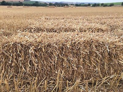 WHEAT STRAW CONVENTIONAL BALES - 2017 HARVEST, SUPERB QUALITY 20Kg EACH