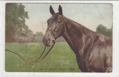 Horse Postcard - COURT-Typical Hunter's Head