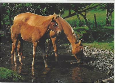 Horse Postcard - Bamforth-Chestnut Mare and Foal