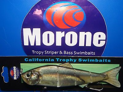 Morone Delta Pond Smelt  Herring Shad Baitfish swimbait trophy striper bass