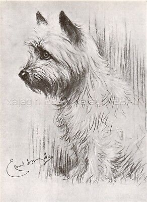 DOG Cairn Terrier Dog, HHH Prince of Wales - Edward VIII's Dog, Print 1930s