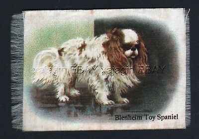 DOG Cavalier King Charles Spaniel 1913 Silk Trading Card
