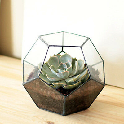 2pcs Clear Geometric Terrarium Box Tabletop Succulent Planter Fern Moss Pot