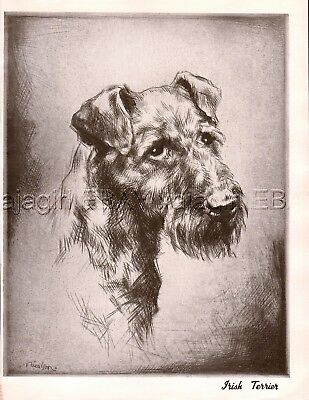 DOG Irish Terrier Exquisite Portrait, Beautiful 1930s Art Print