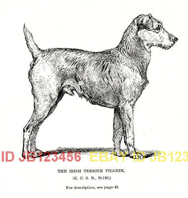 DOG Irish Terrier Named 1890s Antique Rotogravure Print