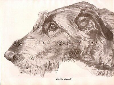 DOG Irish Wolfhound, Named Exquisite Portrait, Beautiful 1930s Art Print