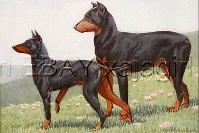 DOG Manchester Terrier, 85+ Year Old ANTIQUE Print