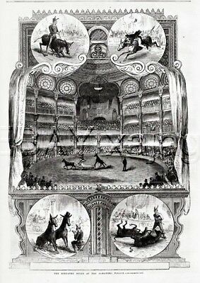 MULE Circus Show Alhambra Palace London, Antique 1850s Engraving Print