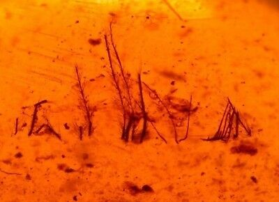 Super RARE Feather Tips with Wasp in Burmite Amber Fossil from Dinosaur Age