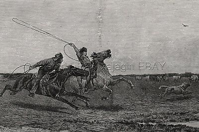 Cowboys Hunting Wolves Wolf Pack with Lassoes, 1880s Antique Print & Article