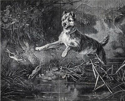 Dog Cairn Terrier Joyfully Chasing Frogs, Large 1880s Antique Print