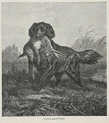 Dog Flat-coated Retriever with Rabbit Hare, Beautiful Large 1870s Antique Print