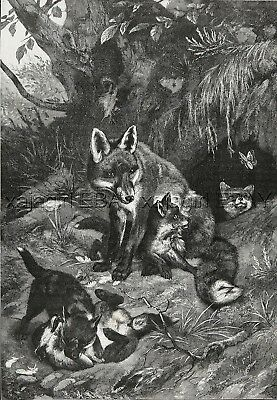 Fox Mother & Puppies Play with Butterfly Near Den, Large 1880s Antique Print