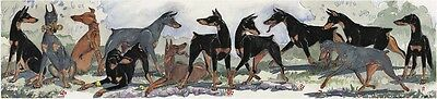 Enid Groves Doberman Pinscher Print