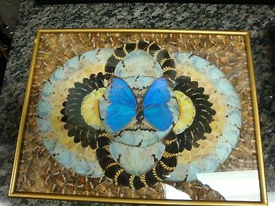 Vintage Real Butterfly Wing Collection Framed Wall Art Picture Beautiful Design