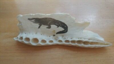 Real genuine ALLIGATOR part SKULL taxidermy Scrimshaw Etched Bone ART reptile