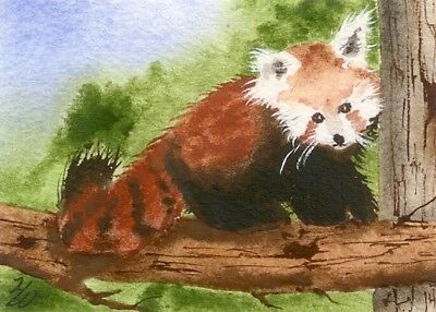ACEO Red Panda Bear in a Tree Watercolor by Heather