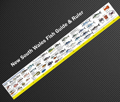 New South Wales fish guide & ruler decal 105cm sticker salt water species