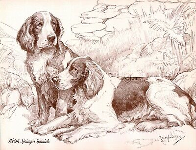 DOG Welsh Springer Spaniel, Beautiful 1930s Art Print by Nina Scott-Langley