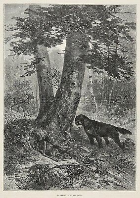 Dog Gordon Setter Youngster Finds Deer Fawn, Both Startled, 1880s Antique Print