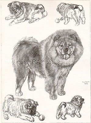 DOG Chow Chow Dogs Sketched Views, Beautiful Art Print 1930s