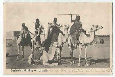 Cpa Egypte , Besharins Driving On Camels