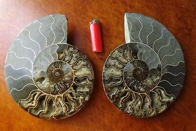 Absolutely Mammoth Pair 3 Kg + Ammonite Millions of years Fossil Crystalline WOW
