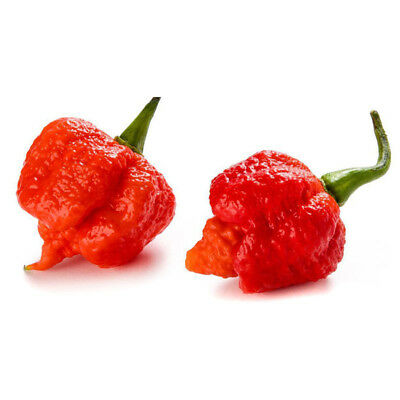 100Pcs Super Hot Carolina Reaper Chilli Pepper Seeds Vegetable Plant Seed Suprem