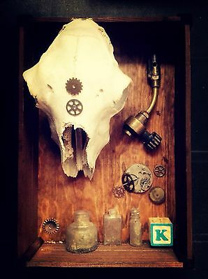 Cabinet Of Curiosities Real Sheep Skull Morbid The Howl Taxidermy