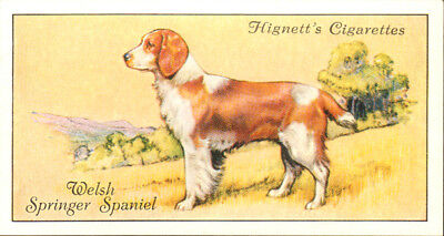 DOG Springer Spaniel (Welsh), Small British Trading Card 1936