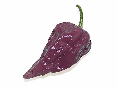 Purple Bhut Jolokia Hottest  Chilli  Naga- hot chili pepper –10 finest seeds