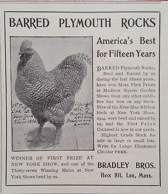 1905 Ad(G8)~Bradley Bros. Lee, Mass. Barred Plymouth Rocks
