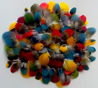 Tiny Macaw  Parrot Head and Body Feathers