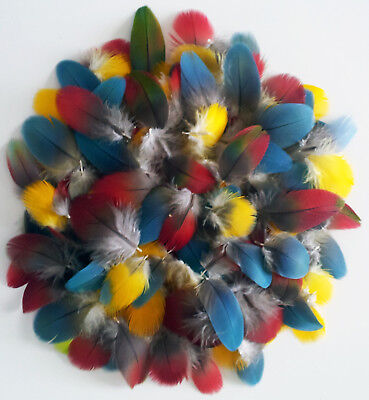 Over 150 Small Macaw & Parrot Body Feathers