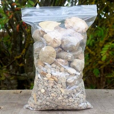 1kg bag of MIXED Fossils - Bulk Buy (brachiopods, bivalves, gastropods, crinoid)