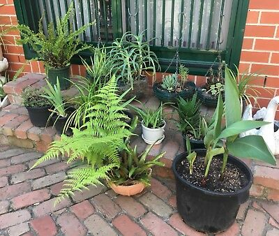 Collection of Cheap Potted Plants/Hanging Baskets Assorted Varieties