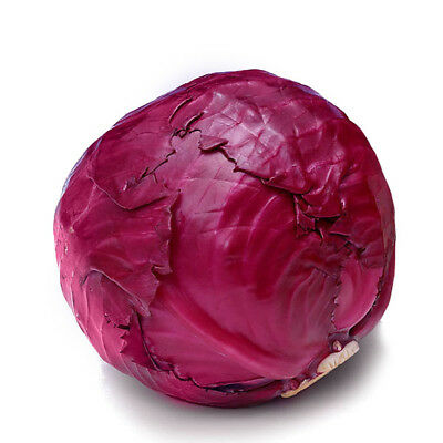 Vegetable Seeds Cabbage Brussels Sprout Rosella Organically Grown Heirloom
