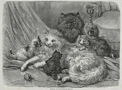 Cat Long-Haired Happy Cat Family, Large 1870s Antique Print, So Beautiful!