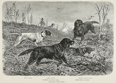 Dog Gordon Setter (All Named) & Pointers Hunting, Large 1880s Antique Print