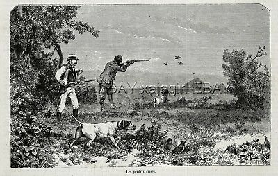 Dog Pointer Hunting Grey Partridges, 1860s Antique Engraving Print