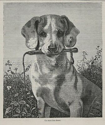 Dog Pointer Puppy English, Dog Training, Beautiful 1870s Antique Print