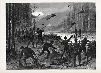 Pheasant Hunting Shooting Party, Plentiful Birds, Large 1880s Antique Print