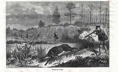 Wolf Hunting, Line of Hunters Flushing, 1870s Antique Engraving Print & Article