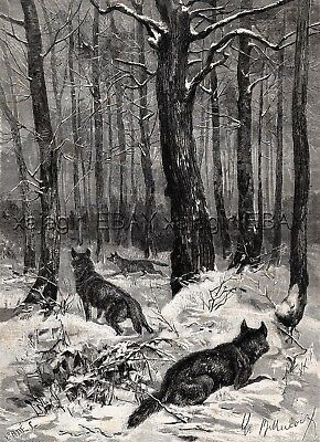 Wolf Hunting, Wolves Circling As Hunters Approach, Large 1880s Antique Print