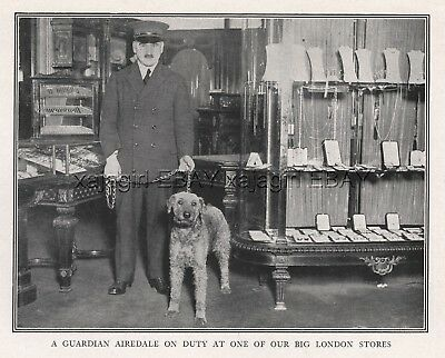 DOG Airedale Terrier Department Store Guard Police Dog, Rare Antique Print