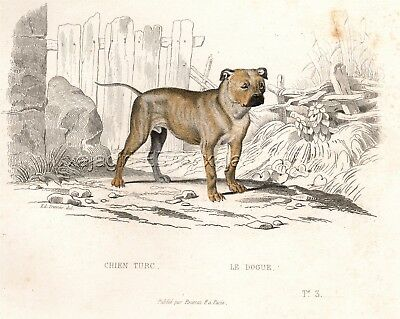 Dog Dogue de Bordeaux, French Mastiff, 1830 Hand-Colored Copper Engraving Print