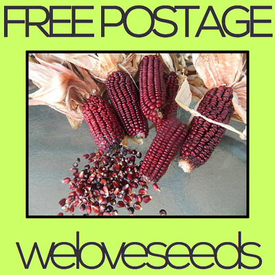 LOCAL AUSSIE STOCK - Heirloom Red Aztec Corn, Vegetable Seeds ~20x FREE SHIPPING